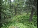 идём в лес 4 18 июля 2019 год