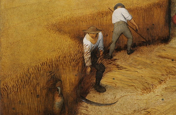 РАСТЕНИЯ, ИЗМЕНИВШИЕ ИСТОРИЮ 10 000 лет назад человек одомашнил пшеницу. Или она его Как привычные нам культуры изменили ход истории .Эти растения знает каждый, но не каждый до конца понимает ту