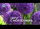 ЛУКИ. Питомник Сады Урала