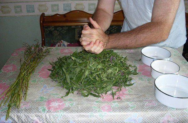 Заготовка Иван-чая. Личный опыт из поселения