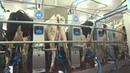 Доильный зал КАРУСЕЛЬ от Milkline - Ваша корова достойна лучшего!