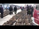 Endlose Qual von Katzen, Hunde Co in China