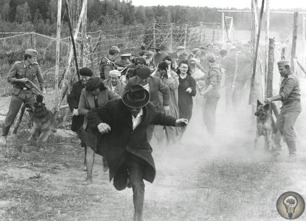 Бабий Яр: военная трагедия под Киевом Расстрел евреев Киева одно из самых кровавых событий Холокоста, но помимо евреев в Бабьем Яру были убиты люди и других наций. Геноцид евреев на окраине
