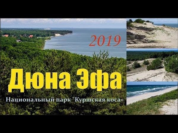 Дюна Эфа (высота Эфа на Куршской косе).Экскурсии по Калининградской области 2019.
