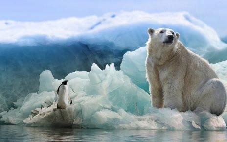 Почему белые медведи не живут в Антарктиде, а пингвины  в Арктике