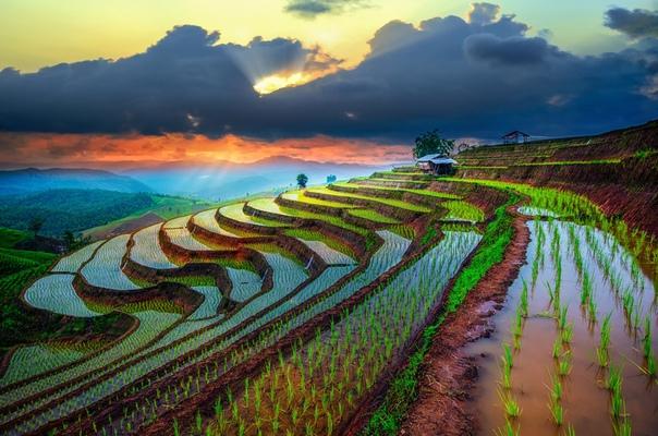 Рисовые террасы Тайланда