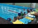 Бассейн Дельфин Тренировочный процесс