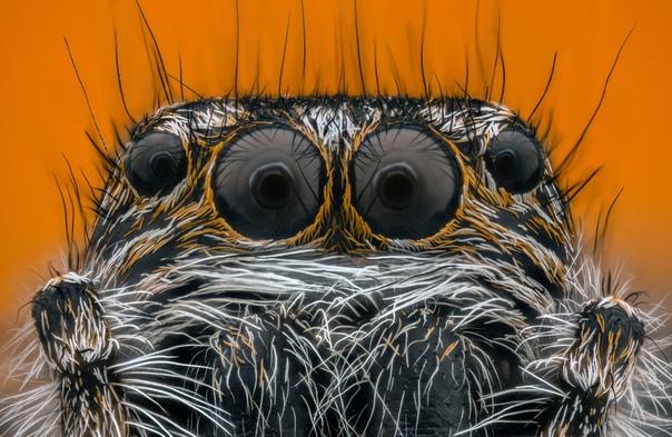 Портрет паука