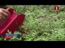 В Беларуси легализовали ягодные комбайны