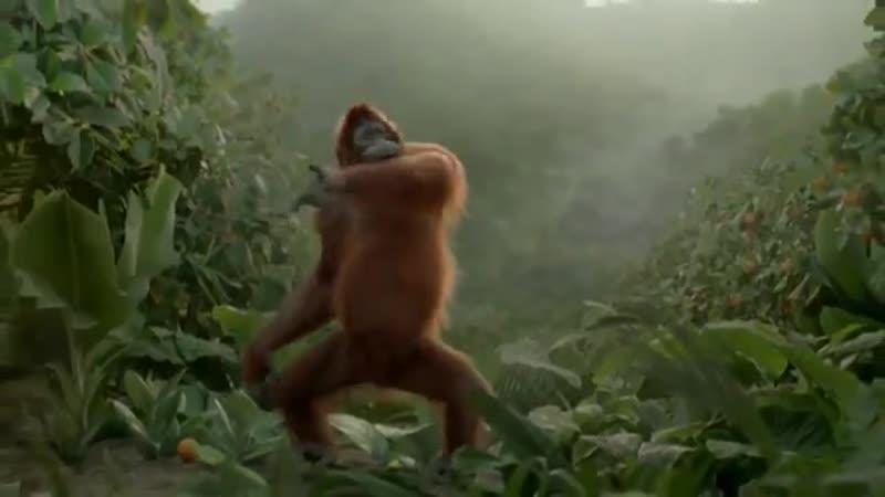 Танцующая обезьяна. Всем хорошего дня ...