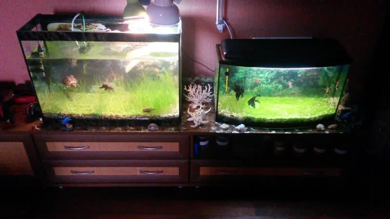 Рыбки и черепаха (Фрося)