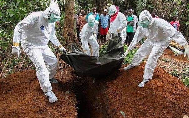 Откуда взялся вирус Эбола Происхождение и история вируса Эбола