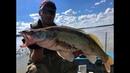 ОГРОМНЫЙ СУДАК В РУСЛОВЫХ КОРЯГАХ Трофейная рыбалка 2019джиг, тест эхолота Гармин, fishing