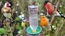 Water feeder for bird cages DIY simple method How to