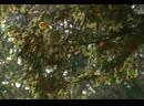 07.Сады мира.2009.WEB-DLRip.GeneralFilm