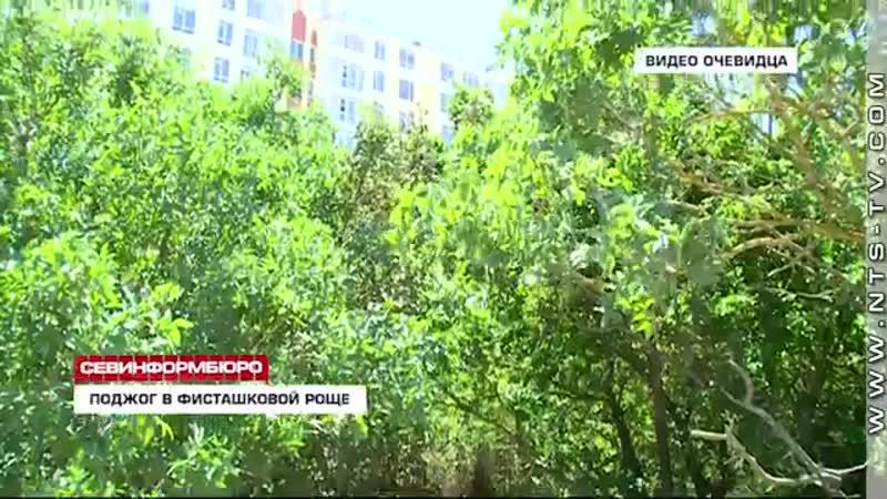 В Севастополе неизвестные подожгли фисташковую рощу