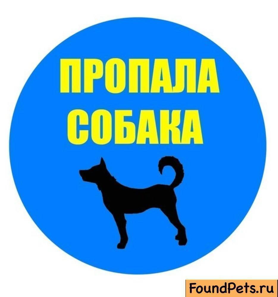 происходят потеряла собаку картинка квартирах можно