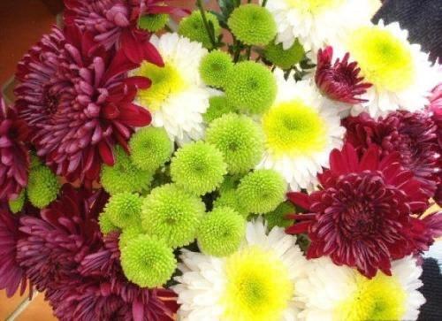Самые красивые японские цветы