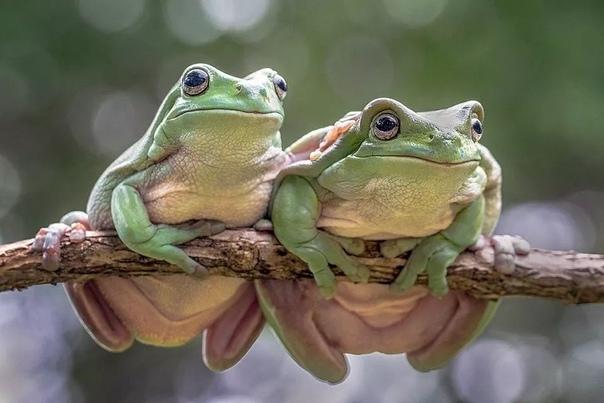 «Влюбленная пара»