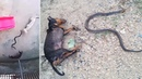 Hero Dogs Die Stopping Cobra From Reaching Sleeping Baby