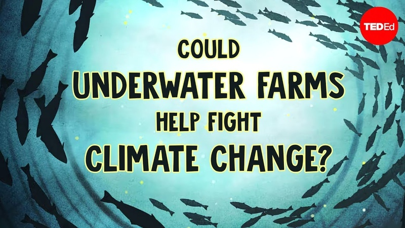 Could underwater farms help fight climate change - Ayana Johnson and Megan Davis