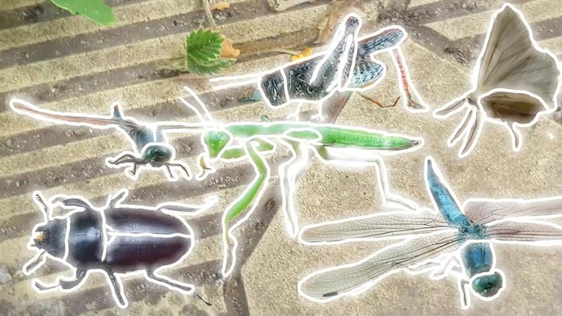 НАСЕКОМАШКИ 3. Насекомые: богомол, стрекоза, кузнечик, жук-олень и мотылек.