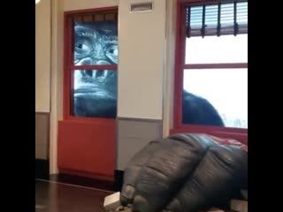 Выставка king kong в эмпайр-стейт-билдинг, нью-йорк