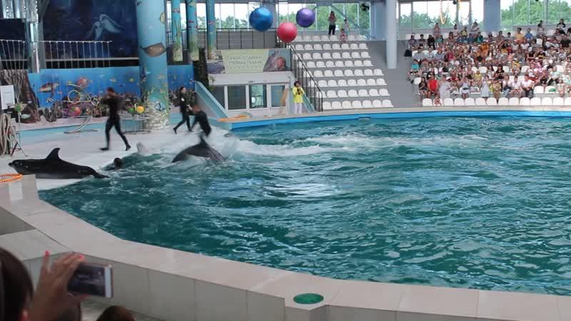 Евпатория. Представление в дельфинарии. 2-е видео.
