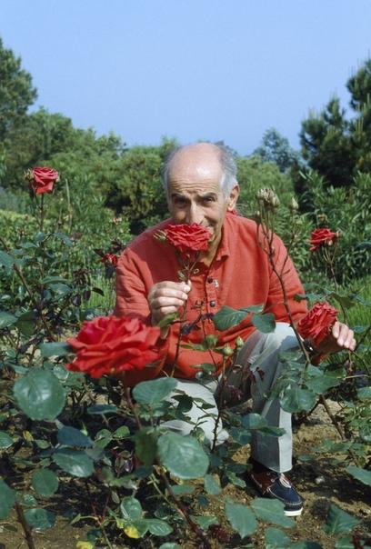 ЛУИ ДЕ ФЮНЕС И ЕГО РОЗЫ В 1970-е годы карьера популярного актера Луи де Фюнеса начала клониться к закату. Он потерял своего любимого партнера Бурвиля, перенес в 1975 г. два инфаркта, и