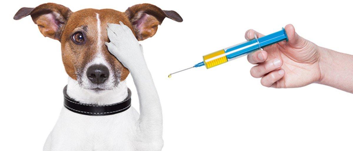 В городе Таганроге проведут бесплатную вакцинацию животных против бешенства