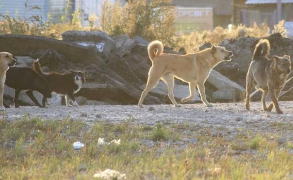 В Брянске на Набережной стая бродячих собак чуть не загрызла женщину