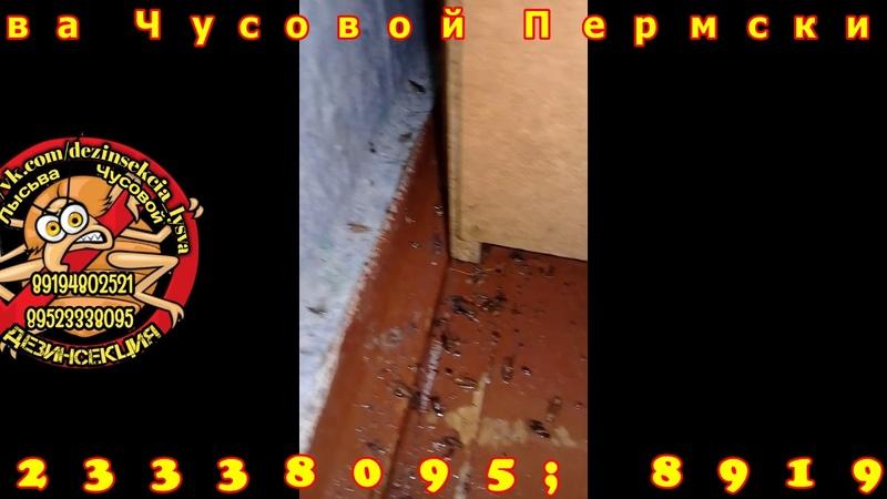 Дезинсекция Лысьва Чусовой Уничтожение тараканов Наши работы
