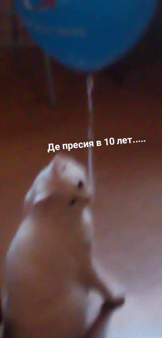 10/10 таблетов веселья