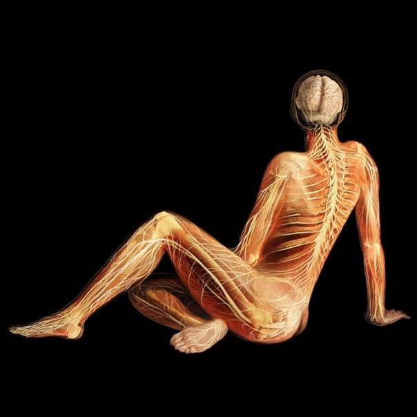 Внутренняя красота Что может быть прекраснее и естественнее, чем человеческое тело Его удивительное строение, позволяющее нам танцевать, влюбляться, заниматься спортом, смеяться и плакать жить