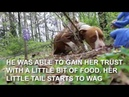 Cammy's Amazing Rescue - Friends to the Forlorn Pit Bull Rescue