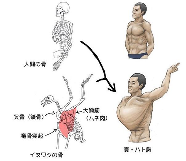 Как бы выглядели люди, если бы наши скелеты были бы как у животных