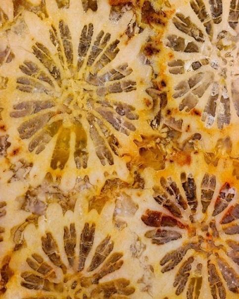 Камни и минералы крупным планом в фотографиях Криса Перани
