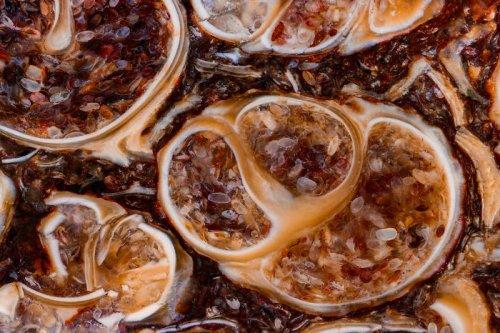 Камни и минералы крупным планом в фотографиях Криса Перани Крис Перани (Chris Perani) американский фотограф, который с детства очарован красотой камней и раковин, которые он находил на пляже,