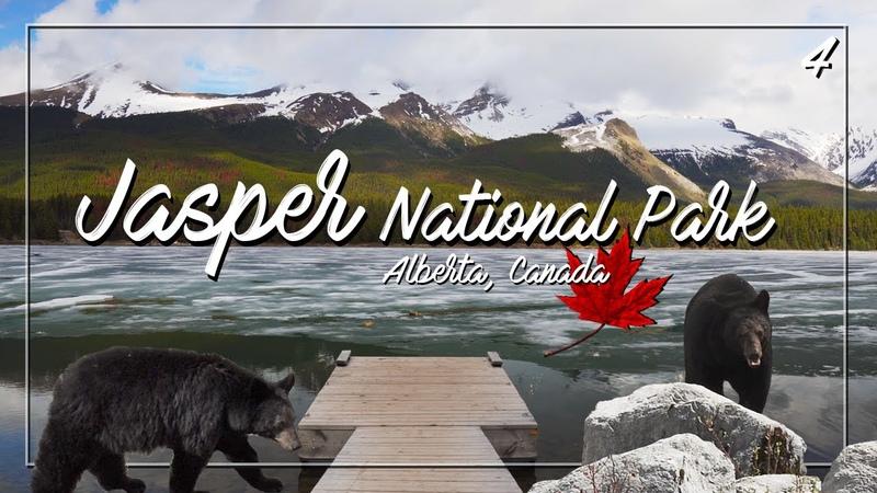 Rondreis Rocky Mountains || Jasper National Park || Alberta Canada || Weebill Lab || Aflevering 4