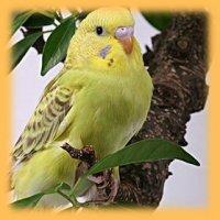 Волнистый Попугай, 1 января 1999, Набережные Челны, id91484302