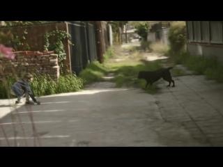 Мальчик и его собака