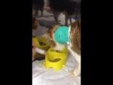 Гоша начал сам кушать! Видео и Уфимской клиники