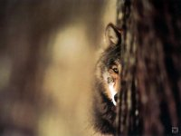 Lissany Werewolfess, 12 мая , Брест, id87135775