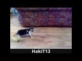 Котёнок и ящерицы С ПРИКОЛЬНОЙ МУЗЫКОЙ