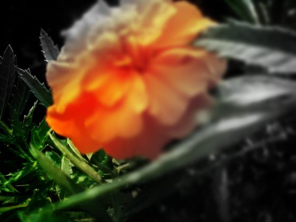 Изменение фокусов, и цветов.