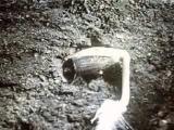 Germination of sunflower seeds (Прорастание семени подсолнечника)