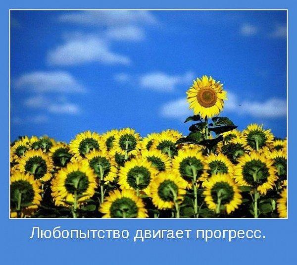 http://cs9212.vkontakte.ru/u242641/117481429/x_885be5f0.jpg