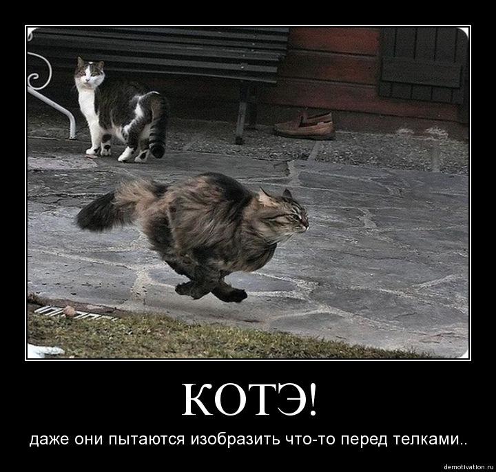 Почему нельзя пинать кошек примета