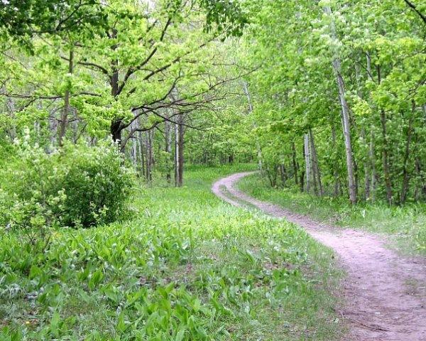 вдохновляющие картинки, природа, весна, зелень, лес, красивая природа, nature