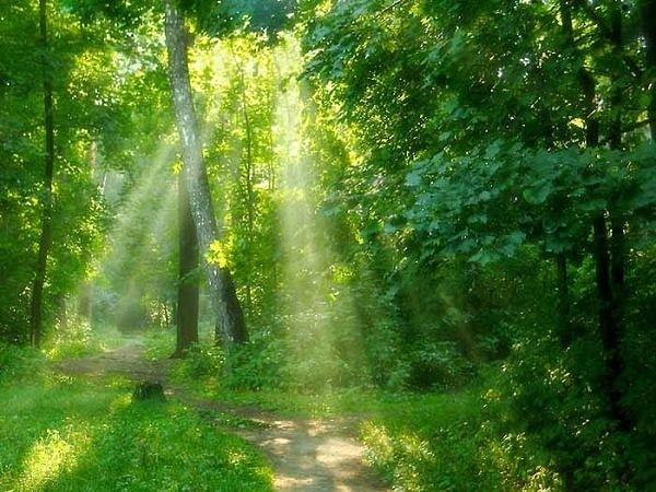 Лес природа зелень 40 шт часть 2